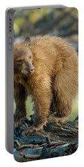 Portable Battery Charger featuring the photograph Black Bear by Doug Herr