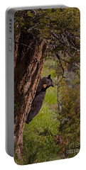 Portable Battery Charger featuring the photograph Black Bear In A Tree by J L Woody Wooden