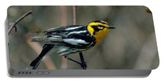 Blackburnian Warbler Portable Battery Charger by Doug Herr