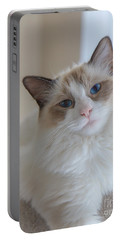 Blue-eyed Ragdoll Kitten Portable Battery Charger