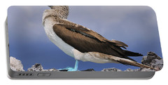 Blue-footed Booby Portable Battery Charger by Tony Beck