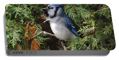 Portable Battery Charger featuring the photograph Blue Jay In Cedar Tree 2 by Brenda Brown