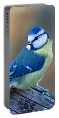 Blue Tit Looking Behind Portable Battery Charger