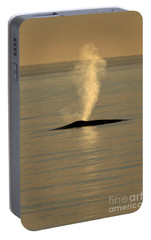 Portable Battery Charger featuring the photograph Blue Whale At Sunset In Monterey Bay California  2013 by California Views Mr Pat Hathaway Archives