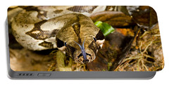 Boa Constrictor Portable Battery Charger by Gregory G. Dimijian, M.D.