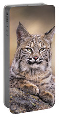 Bobcat Cub Portrait Montana Wildlife Portable Battery Charger