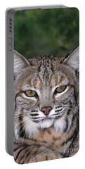 Bobcat Portrait Wildlife Rescue Portable Battery Charger