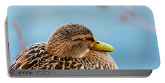 Portable Battery Charger featuring the photograph Bonding In Winter - Female Mallard Duck - Diptych Part 2 by Menega Sabidussi