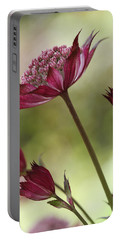 Botanica Portable Battery Charger by Connie Handscomb