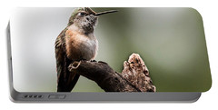 Broad-tailed Hummingbird Sit  Portable Battery Charger