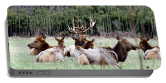 Bull Elk And His Girls Portable Battery Charger