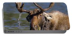 Bull Moose Sampling The Vegetation Portable Battery Charger