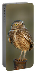 Burrowing Owl At Sunset Portable Battery Charger