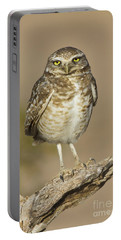 Portable Battery Charger featuring the photograph Burrowing Owl by Bryan Keil