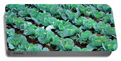 Cabbage, Yamhill Co, Oregon, Usa Portable Battery Charger