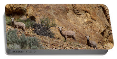 California Bighorn Sheep Portable Battery Charger