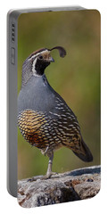 California Quail Portable Battery Charger