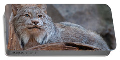 Portable Battery Charger featuring the photograph Canada Lynx by Bianca Nadeau