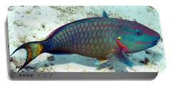 Portable Battery Charger featuring the photograph Caribbean Stoplight Parrot Fish In Rainbow Colors by Amy McDaniel