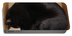 Portable Battery Charger featuring the photograph Cat In The Box by Kerri Mortenson