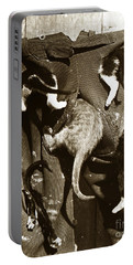 Portable Battery Charger featuring the photograph Cat Tails By Henry King Nourse Circa 1900 Historical Photos by California Views Mr Pat Hathaway Archives