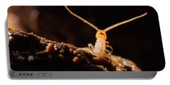 Cave Centipede Portable Battery Charger