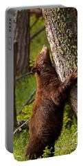 Portable Battery Charger featuring the photograph Cinnamon Boar Black Bear by J L Woody Wooden