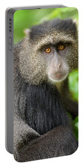 Close-up Of A Blue Monkey Cercopithecus Portable Battery Charger