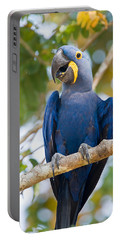 Close-up Of A Hyacinth Macaw Portable Battery Charger
