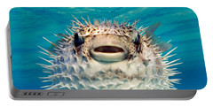 Close-up Of A Puffer Fish, Bahamas Portable Battery Charger