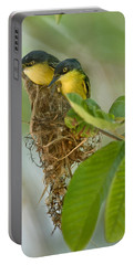 Close-up Of Two Common Tody-flycatchers Portable Battery Charger by Panoramic Images