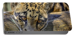 Portable Battery Charger featuring the photograph Clouded Leopard by Steven Sparks