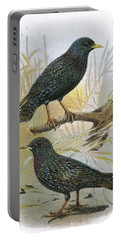Common Starling Top And Intermediate Starling Bottom Portable Battery Charger