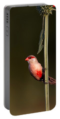Common Waxbill Portable Battery Charger