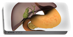 Conceptual Image Of Human Digestive Portable Battery Charger