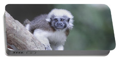 Cotton Top Tamarin  Portable Battery Charger
