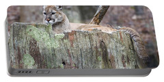 Cougar On A Stump Portable Battery Charger by Chris Flees