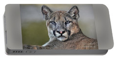 Portable Battery Charger featuring the photograph Cougar  by Savannah Gibbs