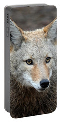 Coyote Portable Battery Charger by Athena Mckinzie