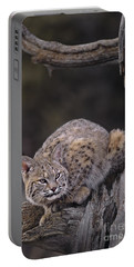Portable Battery Charger featuring the photograph Crouching Bobcat Montana Wildlife by Dave Welling