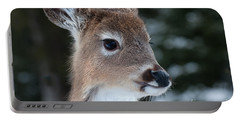 Portable Battery Charger featuring the photograph Curious Fawn by Bianca Nadeau