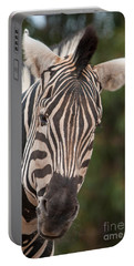 Curious Zebra Portable Battery Charger