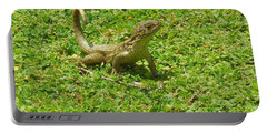 Curly-tailed Lizard Portable Battery Charger by Ron Davidson