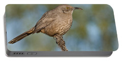 Curve-billed Thrasher Portable Battery Charger