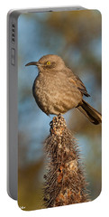 Curve-billed Thrasher On A Cactus Portable Battery Charger