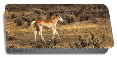 Cute Colt Wild Horse On Navajo Indian Reservation  Portable Battery Charger