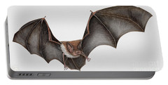Daubentons Bat Myotis Daubentonii - Murin De Daubenton-murcielago Ribereno-vespertilio Di Daubenton Portable Battery Charger