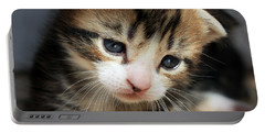 Portable Battery Charger featuring the photograph Daydreamer Kitten by Terri Waters