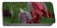 Dew Covered Pasque Flower Portable Battery Charger