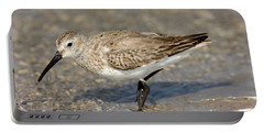 Dunlin Calidris Alpina In Winter Plumage Portable Battery Charger